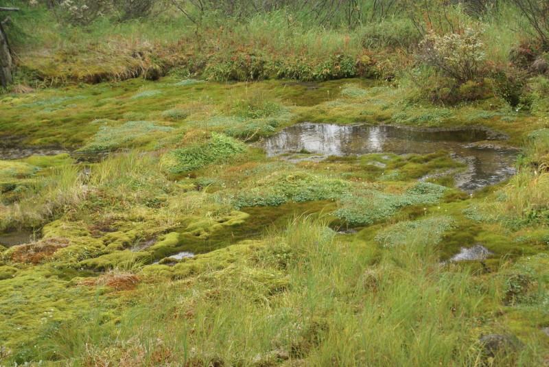 скачать болото торрент - фото 10