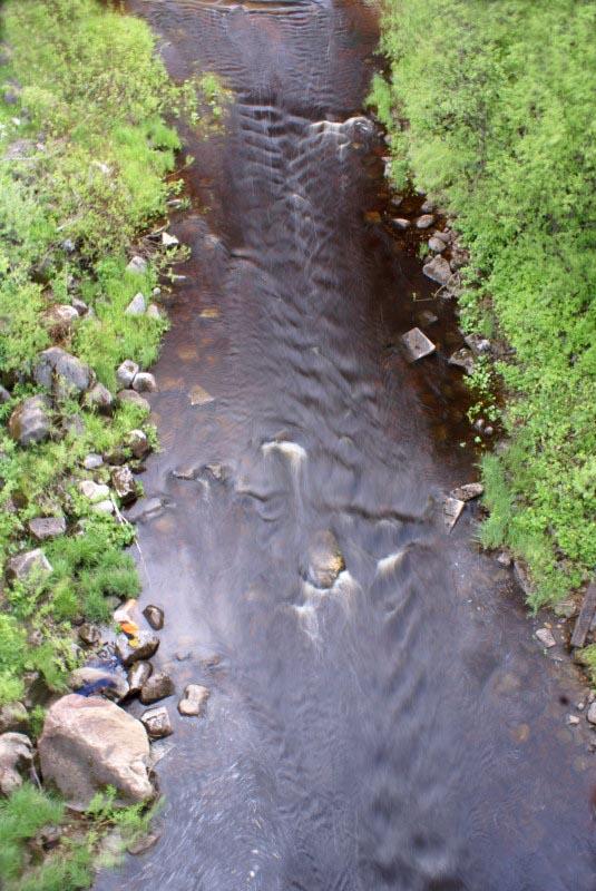 Река Сить. Вологодская область. Кадниковский