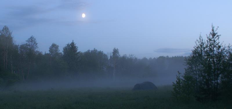 Сить. Туман